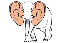 У кого самые большие уши? – iq2u – ученики, репетиторы онлайн ...